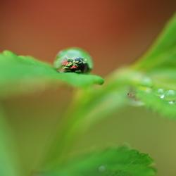 Druppel op groen blad