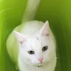Kat in mand