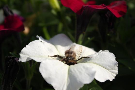 Lente is werken - Honing rondhalen