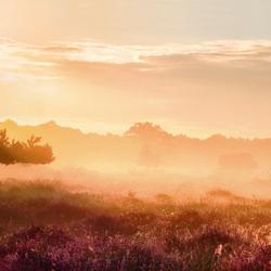 Golden morning (panorama)