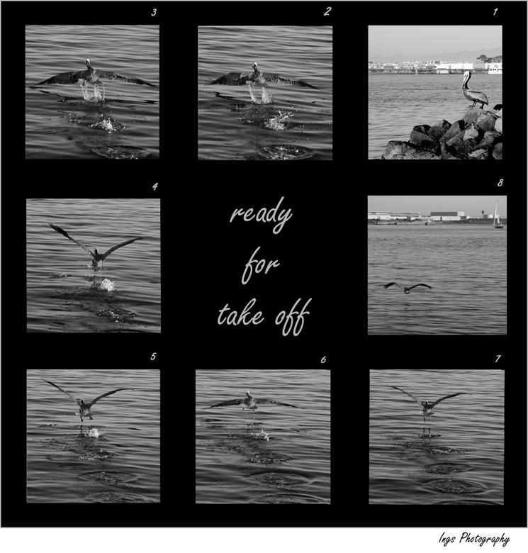 San Diëgo 14 - Voor Wies<br /> <br /> De gekleurde pelikaan komt er aan.... maar eerst even een collage van een pelikaan die ...opsteeg.... was heel