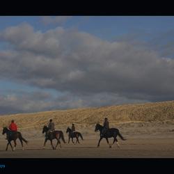 Strand... paarden 3