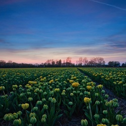 Yellow-green field