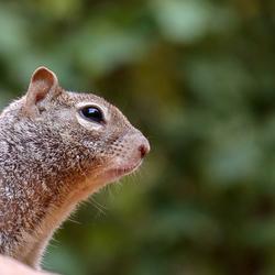 Kijk uit voor de squirrel