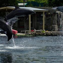 4 dolfijnen