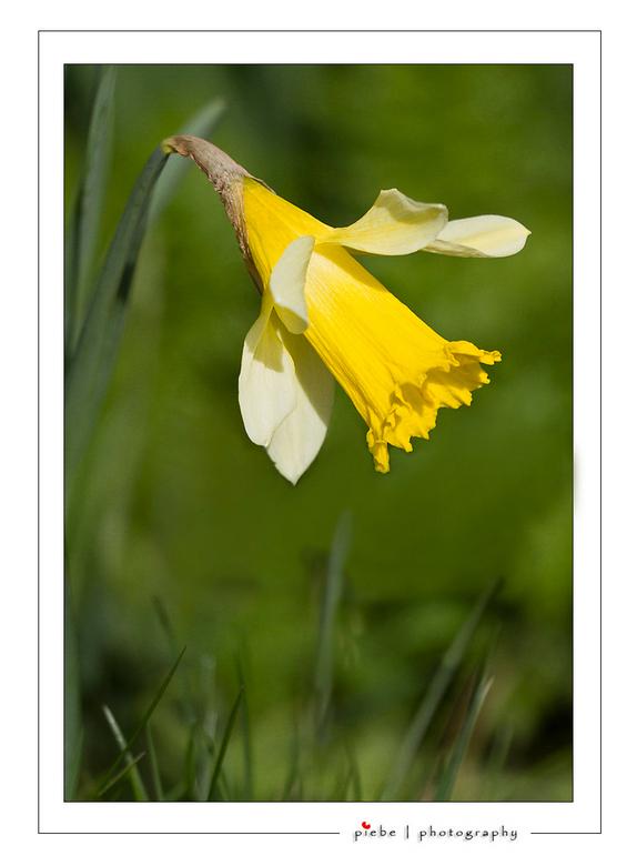 Lente bode - Ik kan het niet laten om ook een foto van de lente in te sturen. Heb deze gisteren (26-03-2011) gemaakt met de tele lens die je voor dit