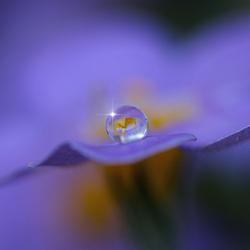 Een waterdruppeltje