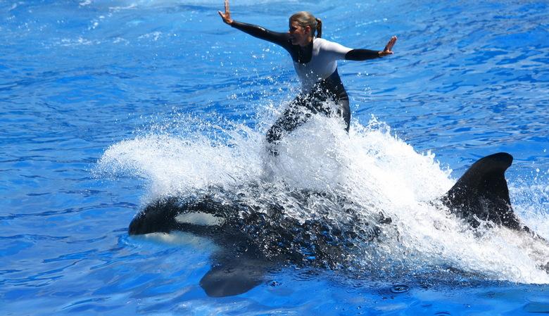 Orka surfen - deze foto gemaak in Seaworld in Orlando Florida