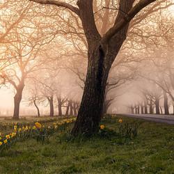 Mistige zonsopkomst op het landgoed Mariénwaerdt in Beesd