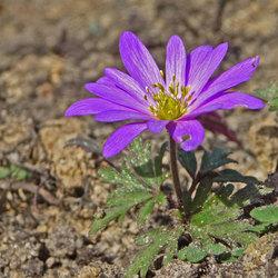 een bloem