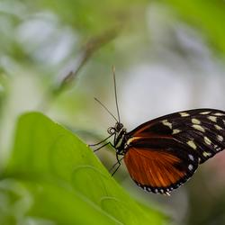 Blijdorp vlinders