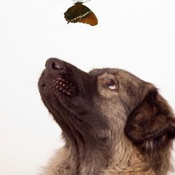 He ...een vlindertje