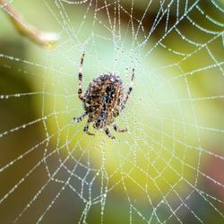 spinnetje spinnetje aan de wand