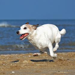 Max On The Run