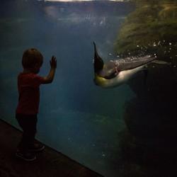 Penguin & Zoon, mazzel momentje