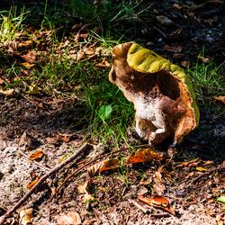 Vreemde paddenstoel