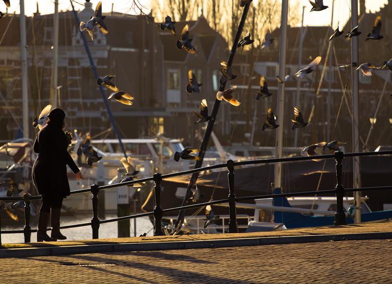 Golden wings - Duiven in de oude binnenstad van Dordrecht.