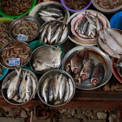 Thaise viswinkel