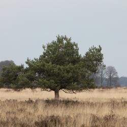 Dwingelderveld.JPG