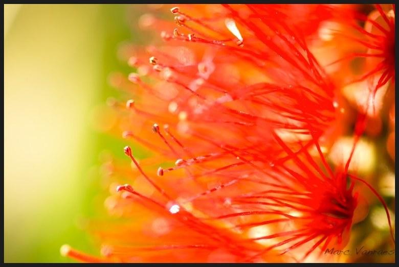de rode stamper - een bloempje kan zo anders zijn als je er eens goed naar kijkt.<br /> <br /> <br /> Nog een fijne dag verder