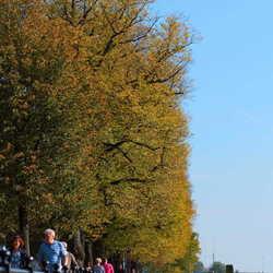 Bomen langs de IJssel bij Deventer