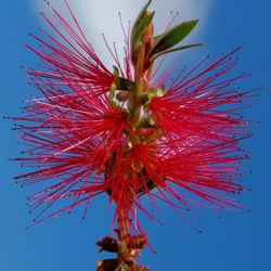 Rode bloemen uit Griekenland