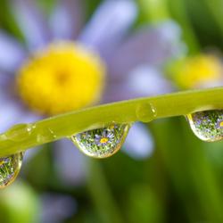 Flower bubbles
