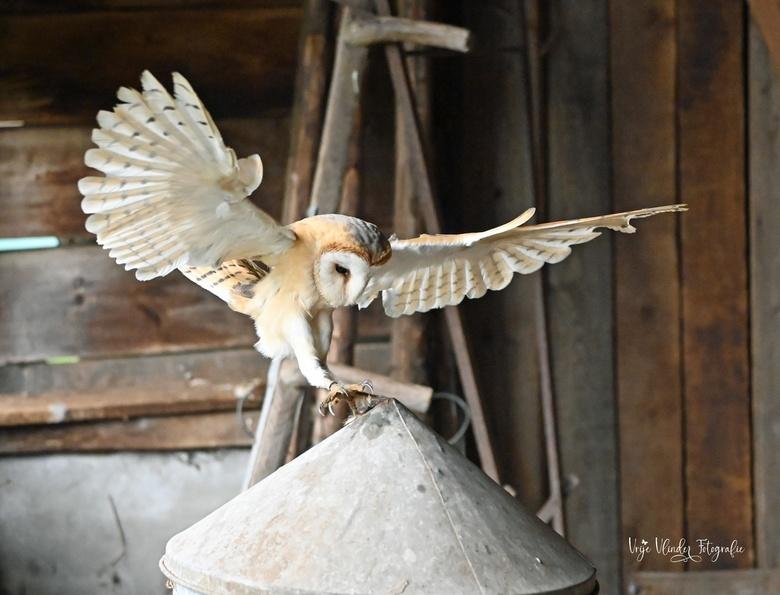 kerkuil landt - Bij de Valk Roofvogels, konden we in dit schuurtje naar hartelust foto's schieten en vooral niet vergeten te genieten.