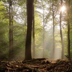 Zon in het Speulderbos