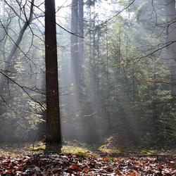 Silk forest