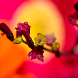 Fijn bloemetje