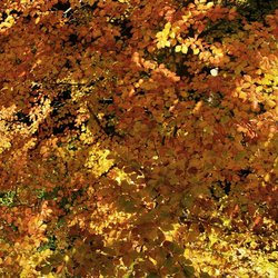 Herfstsfeer Lúsen 3