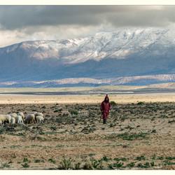 De herder
