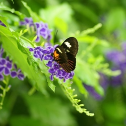 vlinder tuin