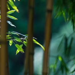 Bamboe I