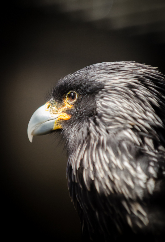 Bird is the word - Dierentuin Antwerpen