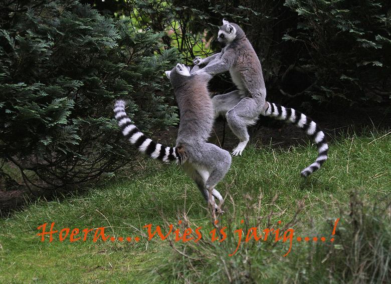 gefeliciteerd met dieren Proficiat Wies! | Dieren foto van Lucille Ball | Zoom.nl gefeliciteerd met dieren