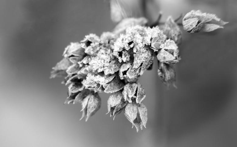 IJzige ochtend - Ja joepie een winterse ochtend. Snel de tuin in. Een mooi wit laagje.
