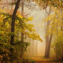 Yellow November