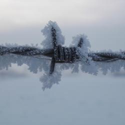 Prikkeldraad in sneeuw
