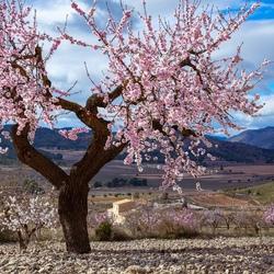 Season of Blossom