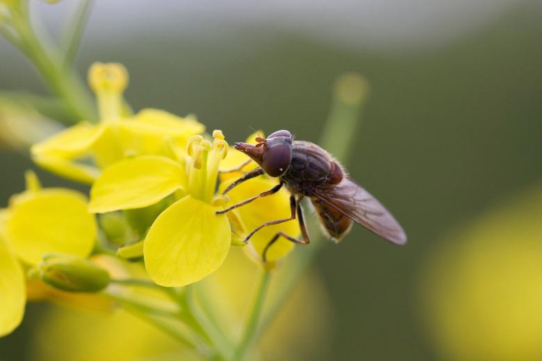 Insect - Als iemand weet wat voor insect dit is, dan hoor ik het graag !