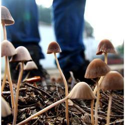 Men & Mushrooms