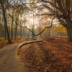 Autumn morning stroll