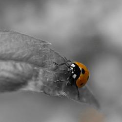Lieveheersbeestje MET stippen :)