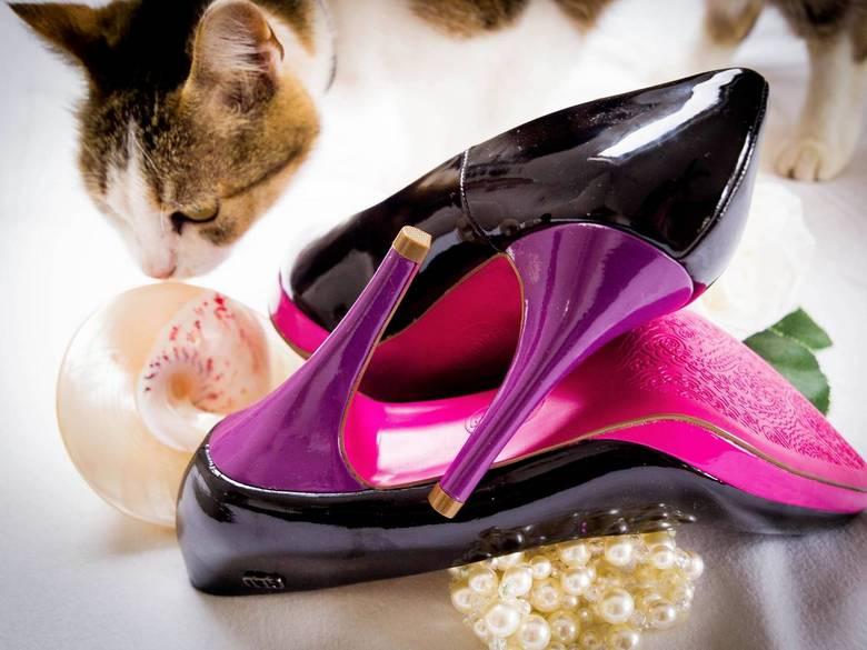 Nieuwsgierige kat - Toen ik mijn schoenen aan het fotograferen was kwam mijn kat weer es ff snuffelen.