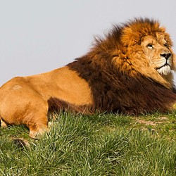 Leo in Wildlands