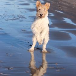 Ronja op het strand