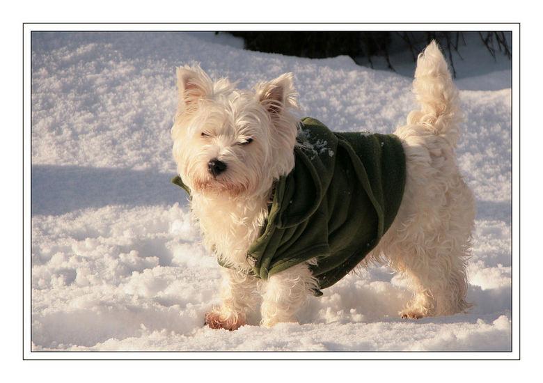 De jas aan - Winter in Loppersum <br /> Kwam ik vanmorgen tegen<br />