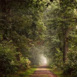 Entering Eden.